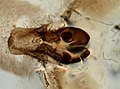 Araneae (YPM IZ 093493).jpeg
