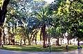 Arboles Plaza San Martím.jpg