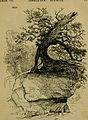 Arboretum et fruticetum Britannicum; or, The trees and shrubs of Britain, native and foreign, hardy and half-hardy, pictorially and botanically delineated, and scientifically and popularly described; (14793625553).jpg