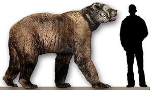 Arctodus simus im Größenvergleich mit einem Menschen