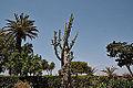 Argotti gardens-IMG 1383.jpg