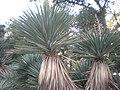 Arizona Cactus Garden 012.JPG