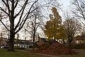 Arnhem-De Laar, de herfst bij elkaar geveegd in de Bredasingel foto13 2016-11-23 14.52.jpg