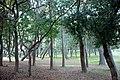 Arvores em Nagoya - panoramio.jpg