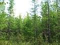Asinovsky District, Tomsk Oblast, Russia - panoramio (124).jpg