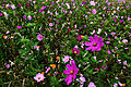 Autumn-flower-field-purple-flowers - Virginia - ForestWander.jpg