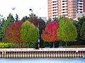Autumn Colours (4007489322).jpg