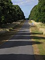 Avenue, Stratfield Saye Park - geograph.org.uk - 1423290.jpg