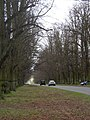 Avenue in Clumber Park - geograph.org.uk - 736046.jpg