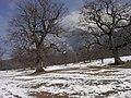 Bäume im Frühmärz - panoramio.jpg