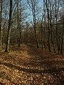 Březová-Oleško, les V Hladomoří.jpg