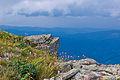 Babia Góra – głazowisko pod Diablakiem z roślinnością alpejską.jpg