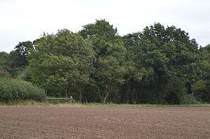 Balsham Wood - Image: Balsham Wood 1