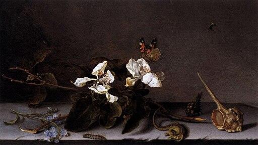 Balthasar van der Ast - Still Life with Apple Blossoms - WGA1036