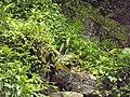 Ban Jhakri Falls - Sikkim - Wikipedia (23).jpg