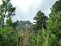 Bansko, Bulgaria - panoramio (43).jpg