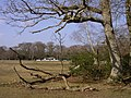 Bartley cricket field from the wood's edge, New Forest - geograph.org.uk - 138452.jpg