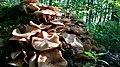 Baumberge, Herbst, Pilzsaison, Wald, Bäume, Boden, Sonne.jpg