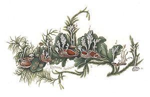 Johan Theodor Holmskjold - Image: Beata Ruris Otia Fungis Danicis Impensa 3