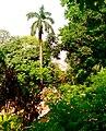 Beauty of spring at Baldha Garden.jpg