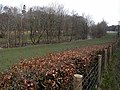Beech hedge and Hermitage Water - geograph.org.uk - 1252679.jpg