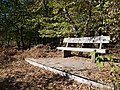 Bench at the Hambach Forest 01.jpg