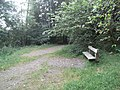 Bench in the Devil's Glen Forest Park - geograph.org.uk - 1437935.jpg