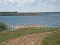 Berezan Estuary.jpg