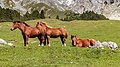 Bergtocht van S-charl naar Alp Sesvenna. 10-09-2019. (actm.) 14.jpg