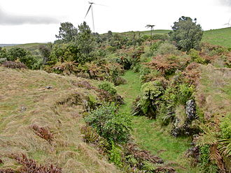 Paper street - This road near Te Uku Wind Farm was started about 1896 and was part formed when construction stopped about 1914.  It drops through a rock cutting about 300 metres long, 3 metres wide and up to 3 metres deep.