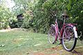 Bicycle by the thicket (14995565536).jpg