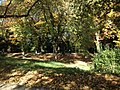 Bielefeld Seltene Bäume.jpg