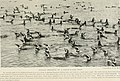 Bird-lore (1918) (14770231693).jpg