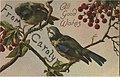 Bird card series, postcard sample from B A Proctor (NBY 423054).jpg