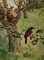 Bird lore (1909) (14568979439).jpg