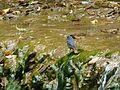Birds of India 3.jpg