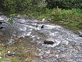 Bistarska reka11.JPG