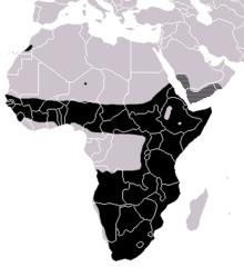 Bitis-arietans-range-map.png