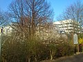 Blüten Universität Dortmund, 13.3.14 - panoramio.jpg