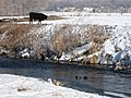 Black Bull, Houses and Mallards - 1 - panoramio.jpg