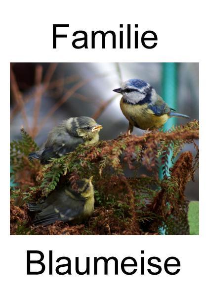 File:Blaumeisenbilderbuch.pdf