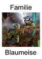 Blaumeisenbilderbuch.pdf