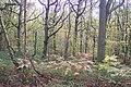 Blean woods - geograph.org.uk - 1559195.jpg