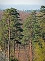 Blick zur Wurmlinger Kapelle von der Königlichen Jagdhütte - panoramio.jpg