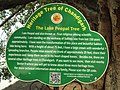 Board sign of Heritage Trees of Chandigarh 02.jpg