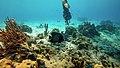 Bonaire 2014 divemstr (13466187993).jpg