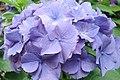 Bonita flor - panoramio - AwOiSoAk KaOsIoWa (1).jpg