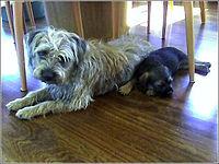 Dog Grooming Supplies Spain
