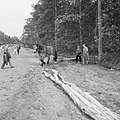 Bosbewerking, arbeiders, dieren, boomstammen, vervoeren, Bestanddeelnr 251-9535.jpg