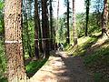 Bosque de Oma (29).JPG
